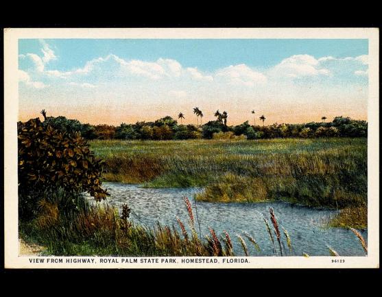 Park Postcard UF00091225